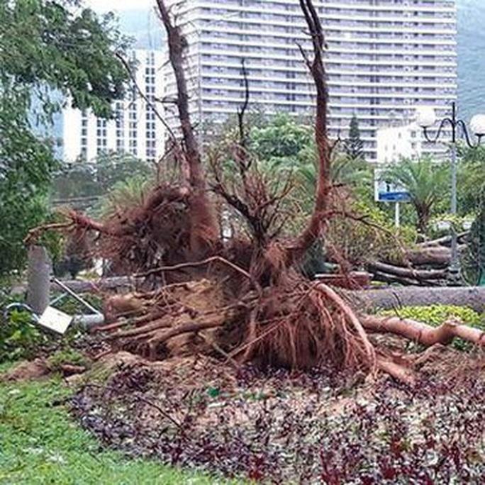 Bình Định: Ngổn ngang sau cơn bão số 5 - Ảnh 13.
