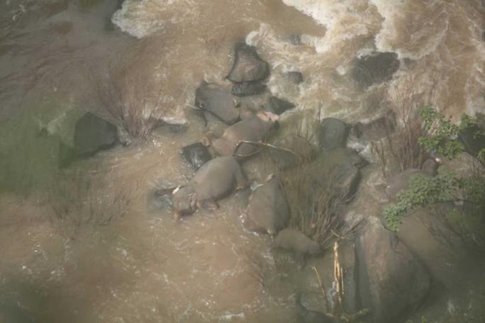 Đàn voi chết thảm sau khi rơi xuống thác nước - Ảnh 1.