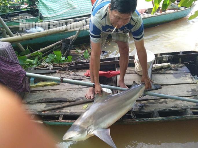 CLIP: Ngư dân miền Tây bắt được cá lạ, nghi là cá mập nước ngọt - Ảnh 2.