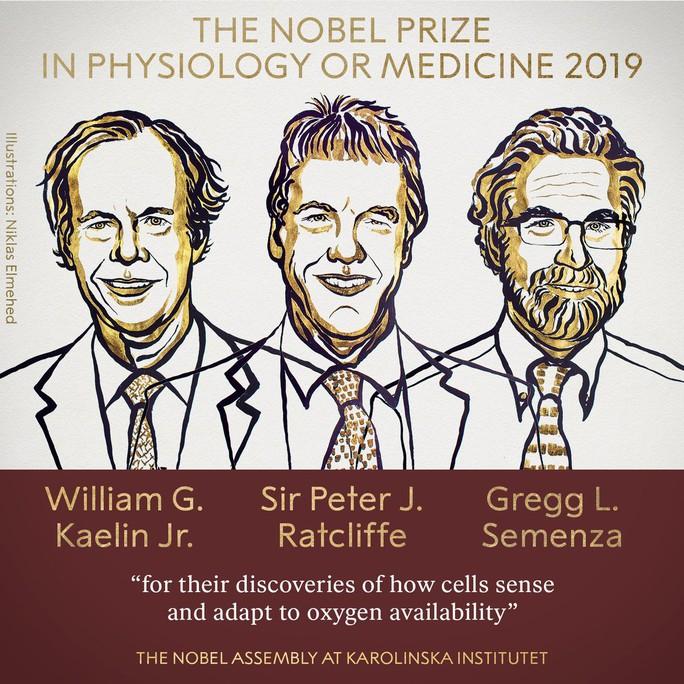 Bất ngờ với Giải Nobel Y học 2019 - Ảnh 2.