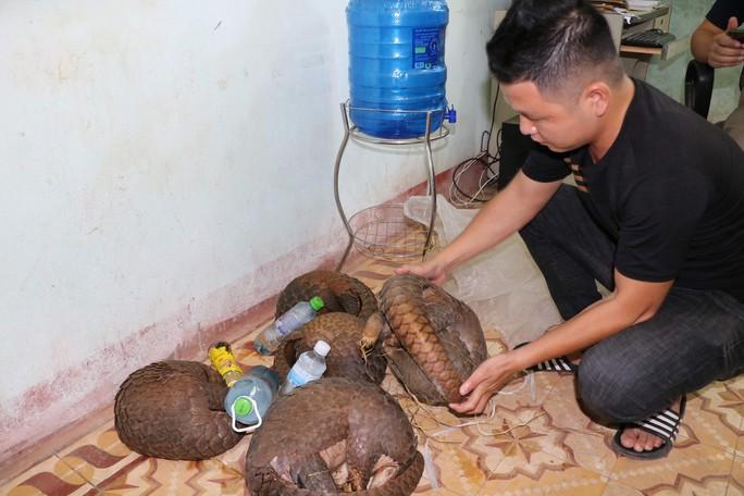 Truy đuổi 2 km, phát hiện 5 cá thể Tê tê Java chuẩn bị đưa đi xẻ thịt - Ảnh 1.
