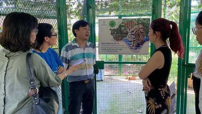 Phát hiện mèo rừng quý hiếm, có bộ lông tuyệt đẹp ngay tại TP HCM - Ảnh 2.