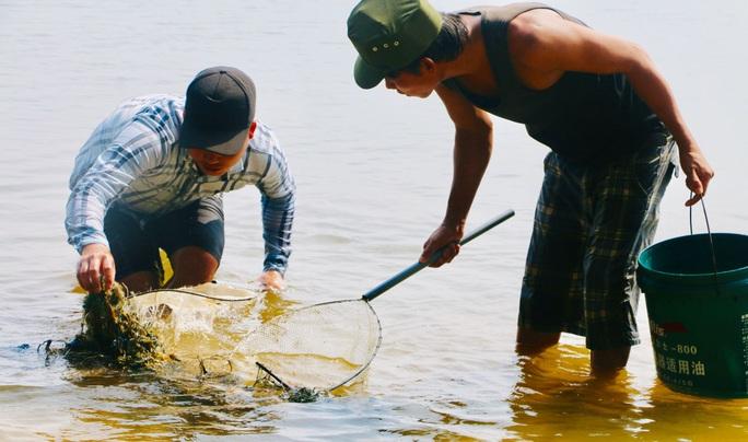 Hàng đàn cá nâu, cá hồng bé đang bơi đầy cửa biển Thuận An - Ảnh 5.