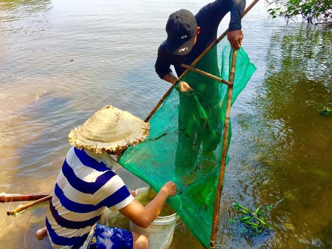 Hàng đàn cá nâu, cá hồng bé đang bơi đầy cửa biển Thuận An - Ảnh 6.