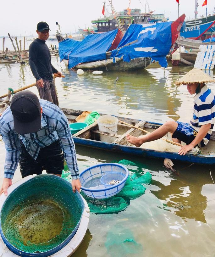 Hàng đàn cá nâu, cá hồng bé đang bơi đầy cửa biển Thuận An - Ảnh 8.