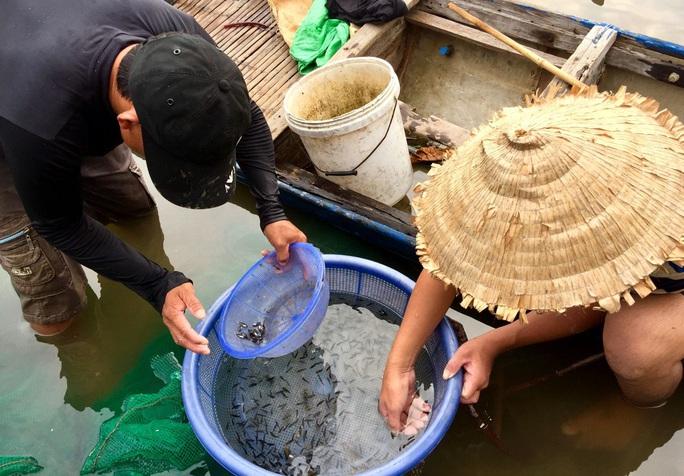 Hàng đàn cá nâu, cá hồng bé đang bơi đầy cửa biển Thuận An - Ảnh 9.