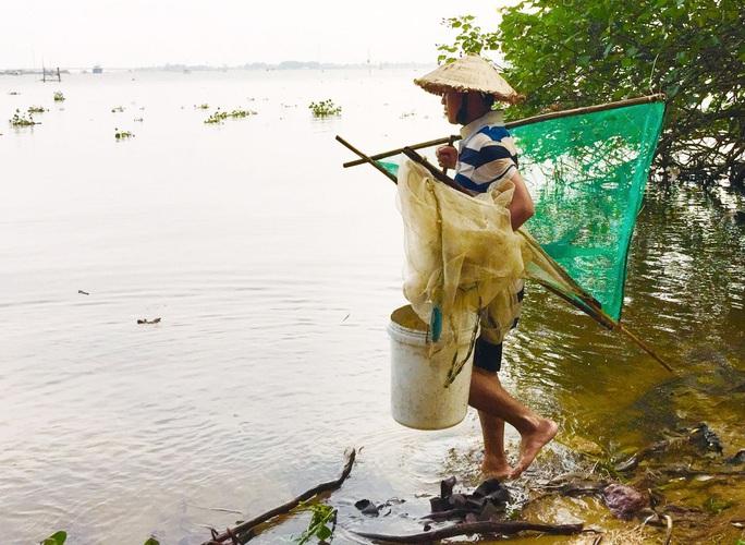 Hàng đàn cá nâu, cá hồng bé đang bơi đầy cửa biển Thuận An - Ảnh 2.