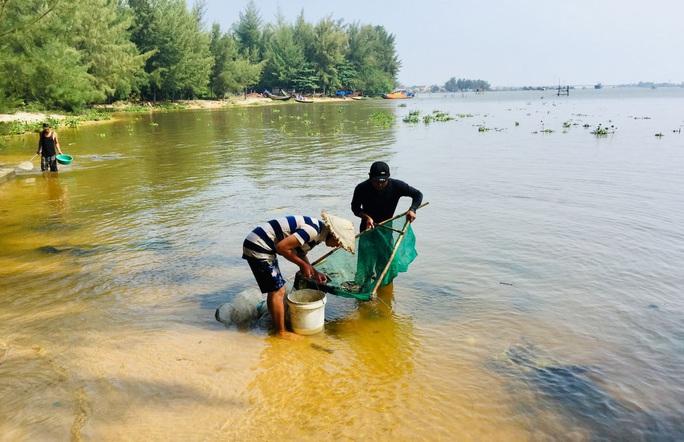 Hàng đàn cá nâu, cá hồng bé đang bơi đầy cửa biển Thuận An - Ảnh 3.