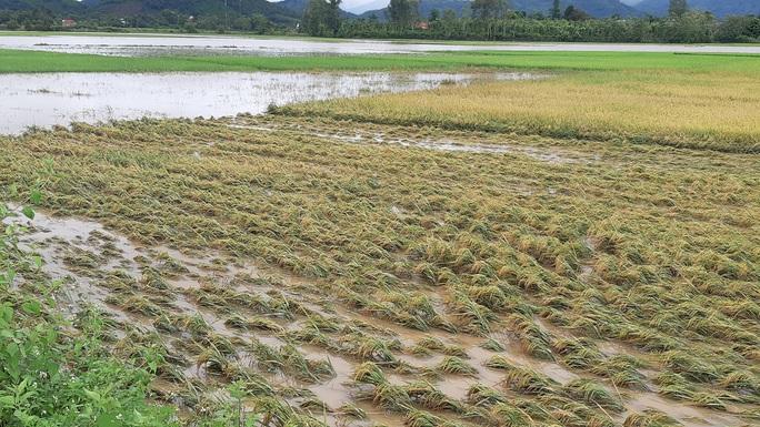 Đắk Lắk: Hàng trăm nhà dân chìm trong nước lũ - Ảnh 9.