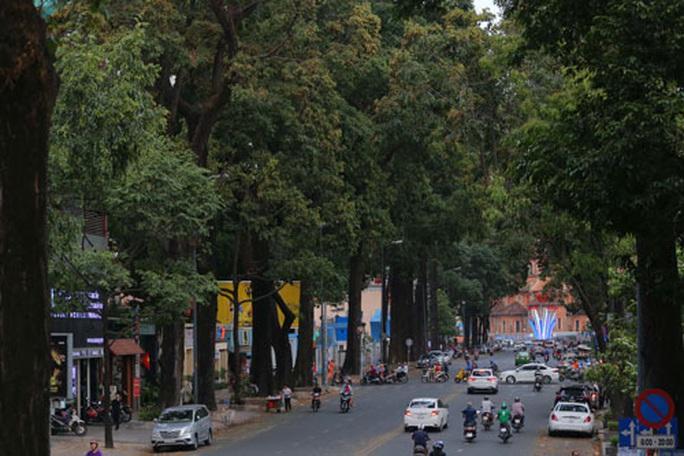 Lắng nghe người dân hiến kế: Tạo mảng xanh cho thành phố - Ảnh 1.