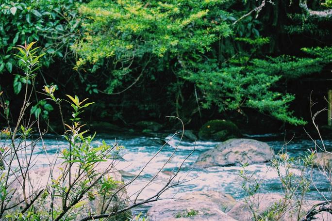 Đến Quảng Bình, detox tinh thần dưới dòng suối xanh ngọc bích - Ảnh 8.