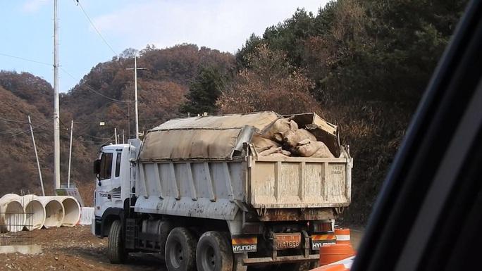 Hàn Quốc chặn máu lợn gần biên giới với Triều Tiên - Ảnh 2.