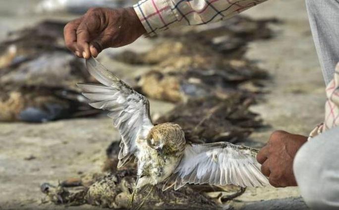Hơn 2.400 con chim chết bên vùng hồ rộng gần 200 km vuông - Ảnh 3.