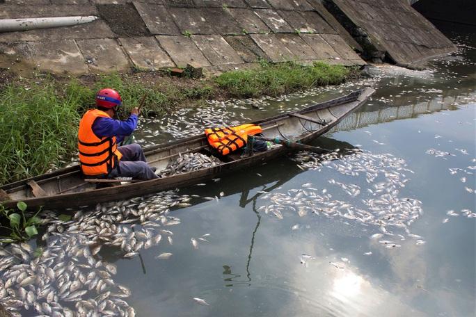 Bất ngờ với nguyên nhân khiến hàng tấn cá chết nổi trắng hồ Đại An - Ảnh 3.