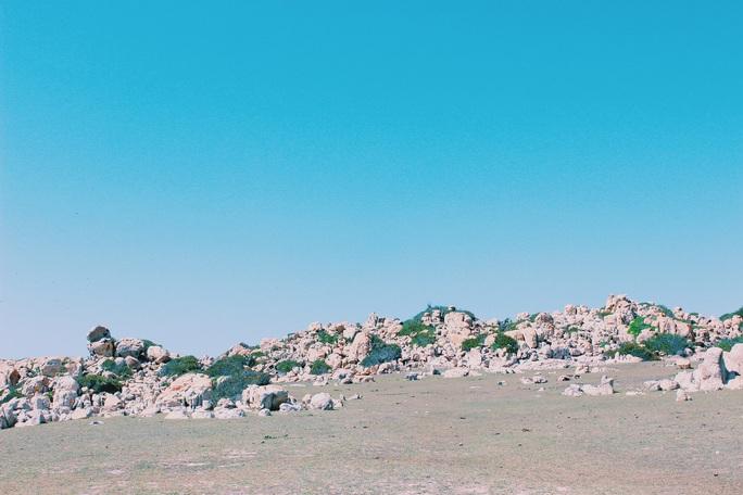 Lạc giữa rừng khô Phan Rang - Ảnh 1.