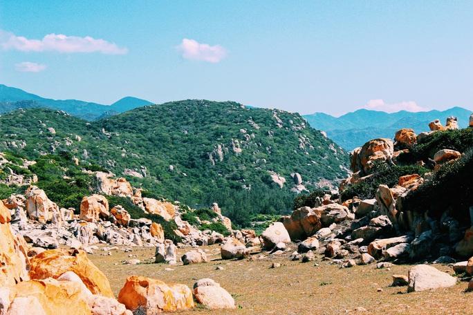 Lạc giữa rừng khô Phan Rang - Ảnh 7.