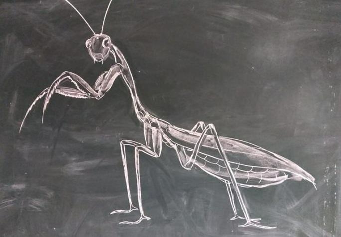 Thầy giáo vẽ tranh bằng phấn trắng trên bảng đen khiến học trò thích thú, cuốn hút mỗi giờ học - Ảnh 9.