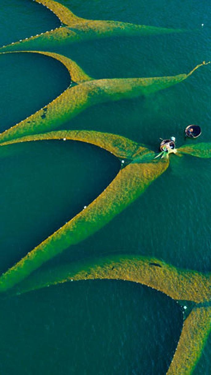 Cuộc thi ảnh Nét đẹp lao động: Lên rừng, xuống biển... - Ảnh 5.