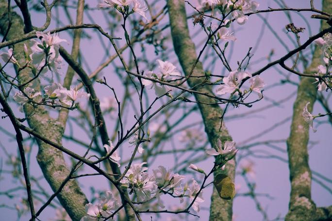 Đến Đà Lạt ngắm những bông hoa tuyết trắng - Ảnh 8.
