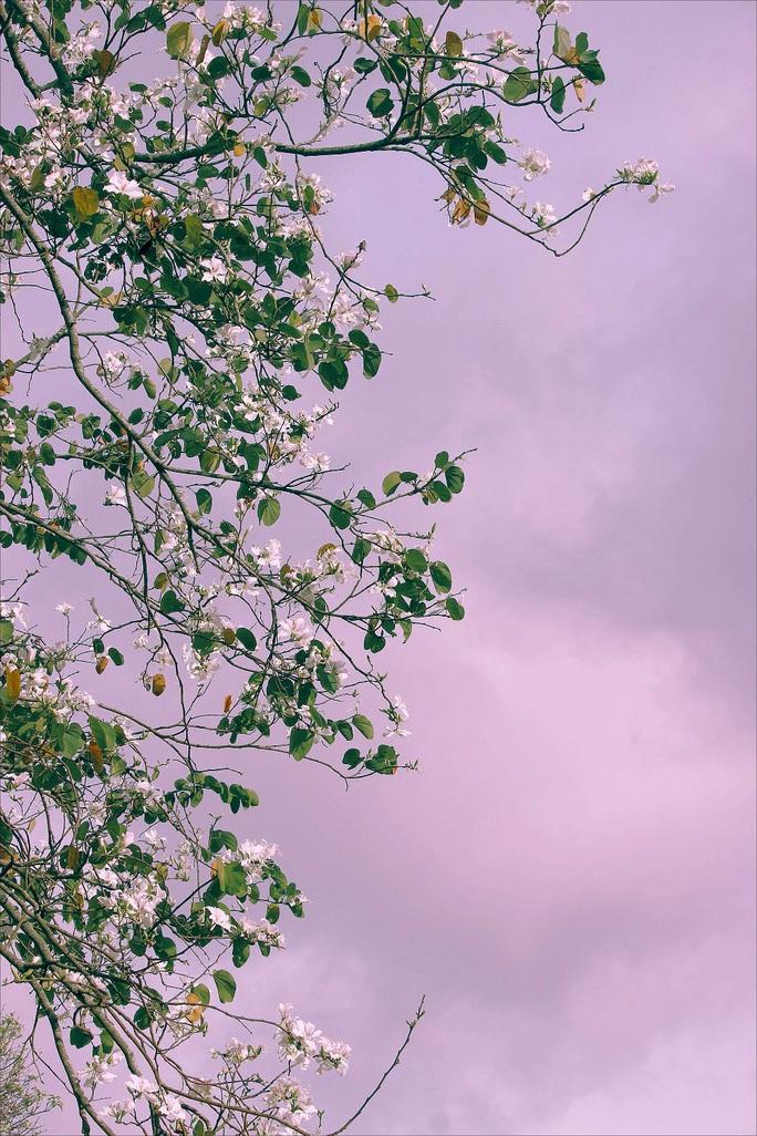 Đến Đà Lạt ngắm những bông hoa tuyết trắng - Ảnh 5.