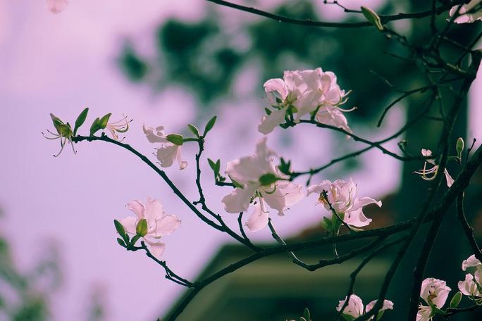 Đến Đà Lạt ngắm những bông hoa tuyết trắng - Ảnh 6.