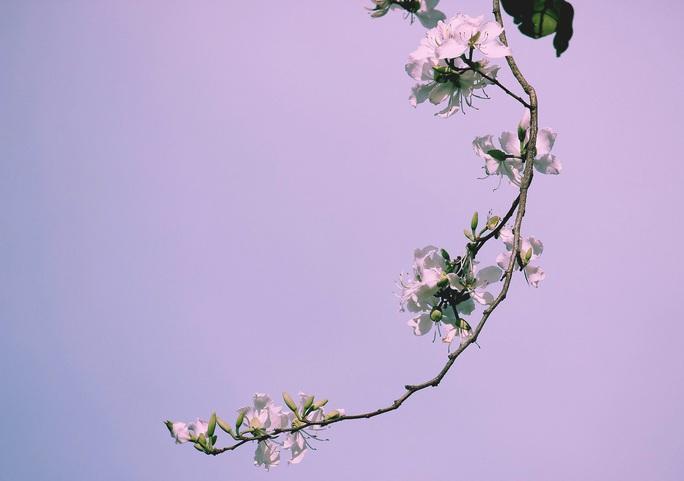 Đến Đà Lạt ngắm những bông hoa tuyết trắng - Ảnh 9.