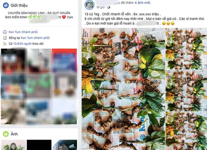Quốc bảo Sâm Ngọc Linh thành hàng chợ, bán đầy trên mạng xã hội  - Ảnh 1.