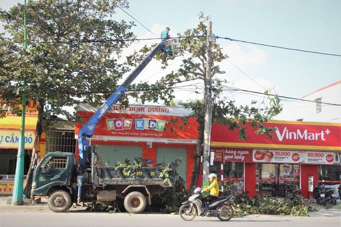 Vì sao hàng loạt cây xanh trên đường phố Đông Hà bị đốn hạ? - Ảnh 1.