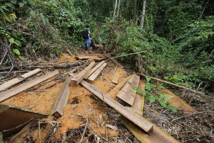 Rừng Quảng Nam tiếp tục bị tàn phá tan hoang - Ảnh 2.