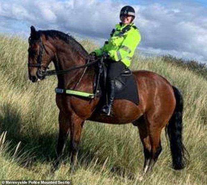 Anh: Ngựa cảnh sát phải uống trà sữa mới chịu làm việc - Ảnh 3.