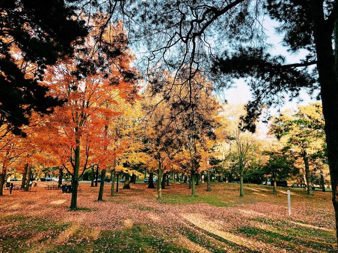 Mùa thu đã nhuộm vàng xứ sở lá phong - Ảnh 4.