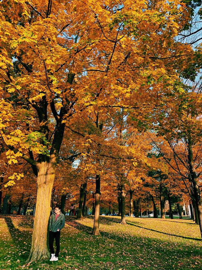 Mùa thu đã nhuộm vàng xứ sở lá phong - Ảnh 8.