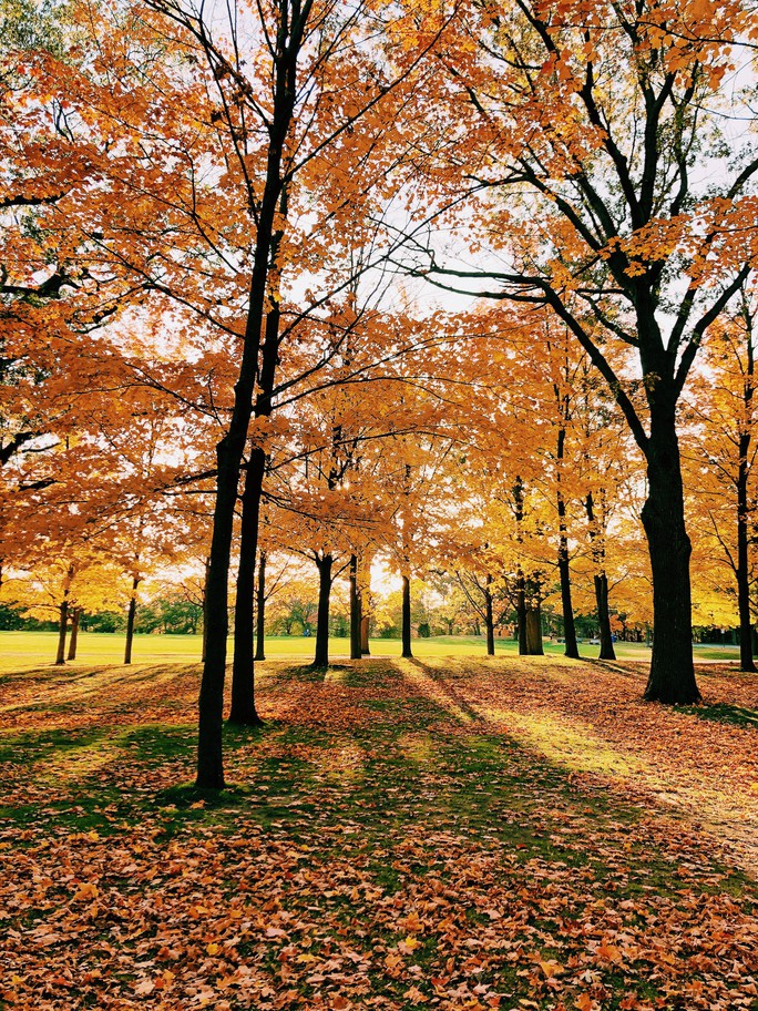 Mùa thu đã nhuộm vàng xứ sở lá phong - Ảnh 7.