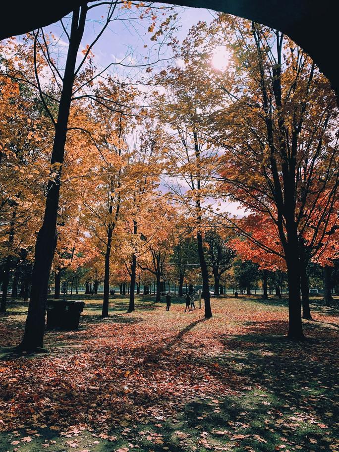 Mùa thu đã nhuộm vàng xứ sở lá phong - Ảnh 9.