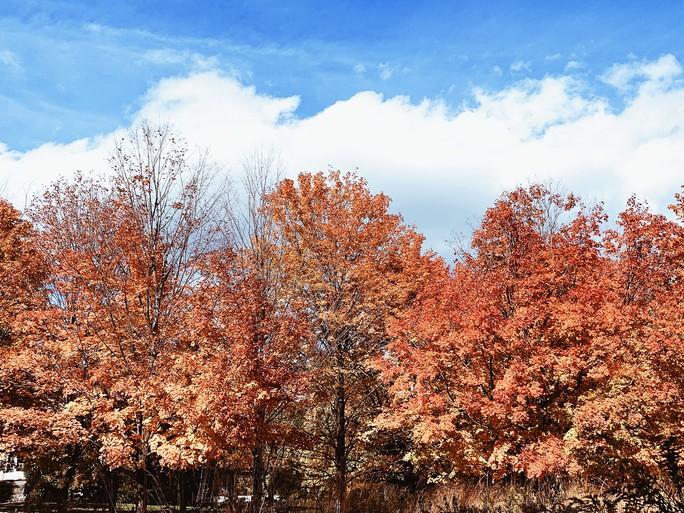 Mùa thu đã nhuộm vàng xứ sở lá phong - Ảnh 6.