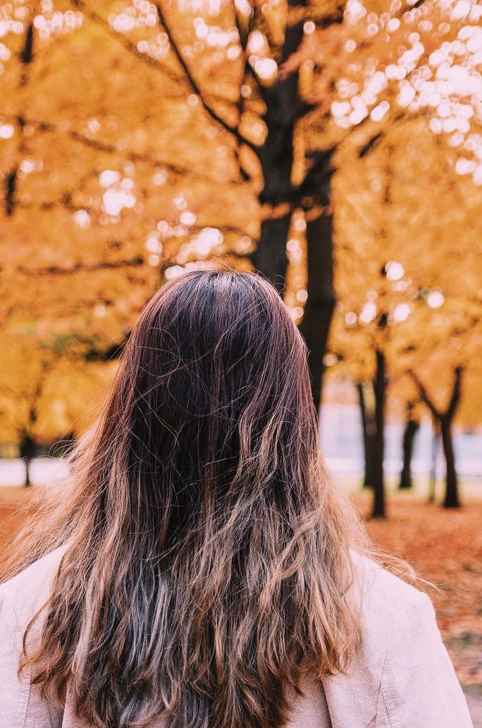Mùa thu đã nhuộm vàng xứ sở lá phong - Ảnh 13.