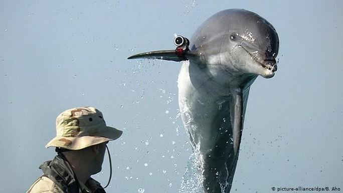 Từ hoàng yến bi thương, đại bàng sát thủ đến cá heo cảm tử - Ảnh 7.