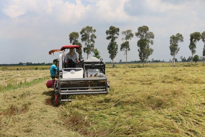 Nhà nông vươn lên làm giàu nhờ Quyết định 68 - Ảnh 2.