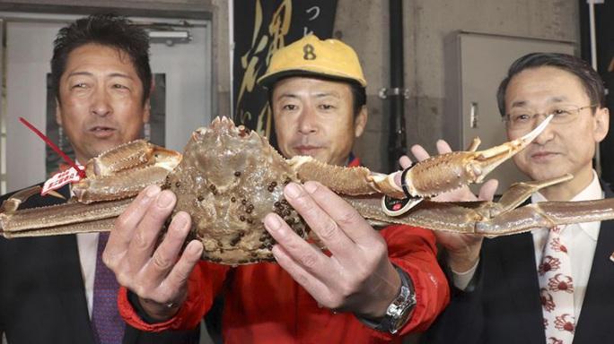Một con cua tuyết bán với giá kỷ lục 46.000 USD tại Nhật - Ảnh 1.