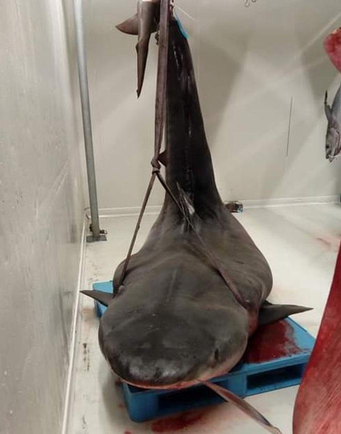 Mổ bụng cá mập, phát hiện bàn tay đeo nhẫn - Ảnh 1.