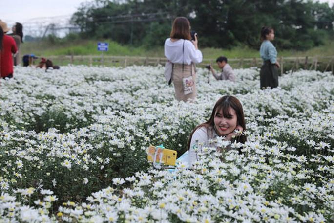 Vườn cúc họa mi giữa lòng TP Đà Nẵng - Ảnh 1.