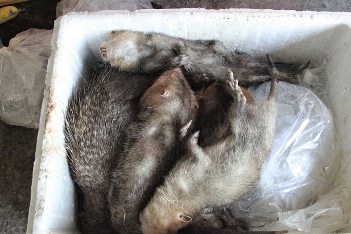 Vụ thú rừng chết dần trong kho hải quan: Chưa chốt phương án xử lý vì thiếu hồ sơ  - Ảnh 2.