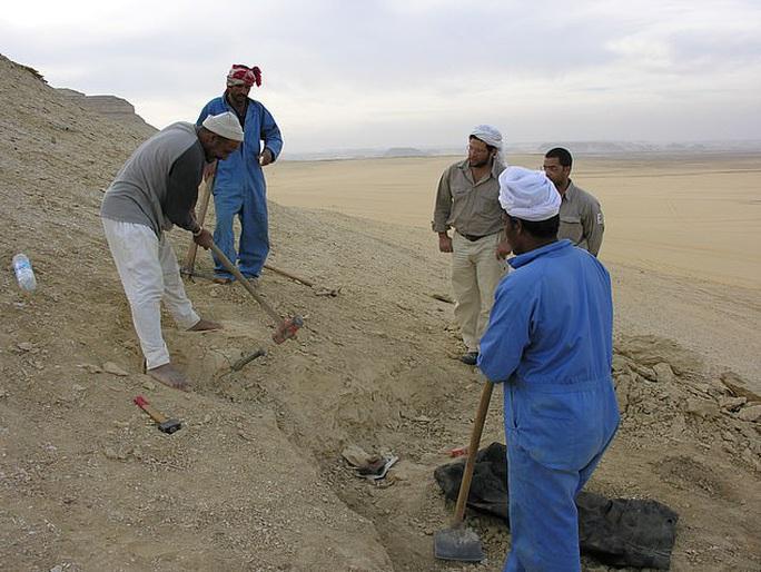 Quái vật biến hình 35 triệu tuổi lộ diện giữa sa mạc Ai Cập - Ảnh 1.