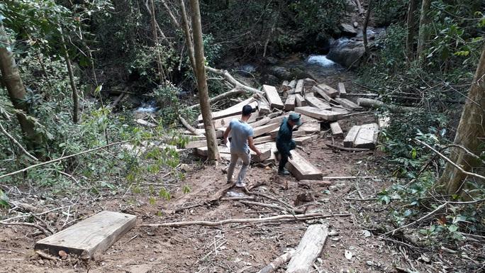 Phát hiện vụ phá rừng quy mô lớn ở Kon Tum - Ảnh 3.