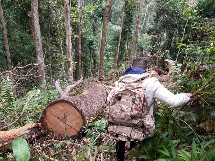 Phát hiện vụ phá rừng quy mô lớn ở Kon Tum - Ảnh 2.