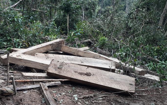 Phát hiện vụ phá rừng quy mô lớn ở Kon Tum - Ảnh 1.
