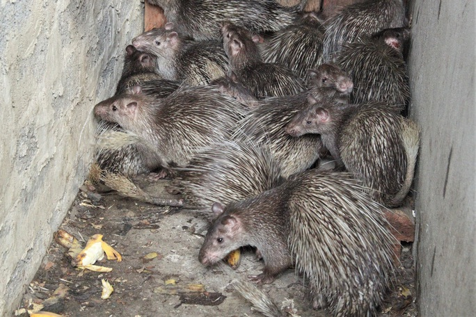 Cận cảnh thú rừng trước lúc thả lại rừng sau nửa tháng bị giam trong kho hải quan - Ảnh 2.