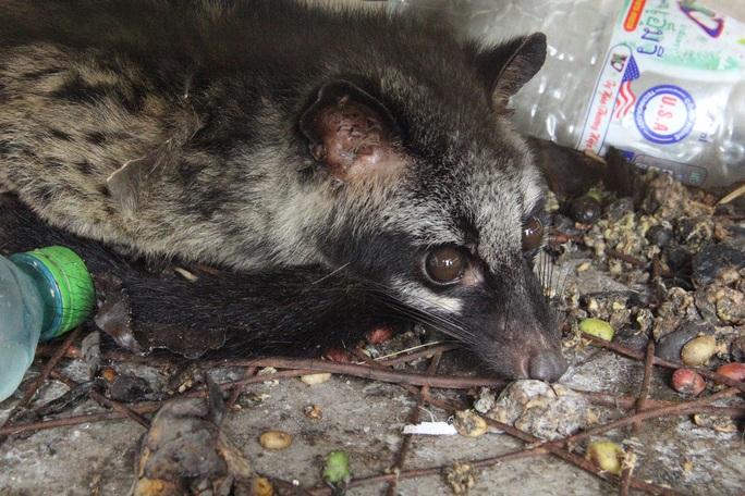 Cận cảnh thú rừng trước lúc thả lại rừng sau nửa tháng bị giam trong kho hải quan - Ảnh 3.