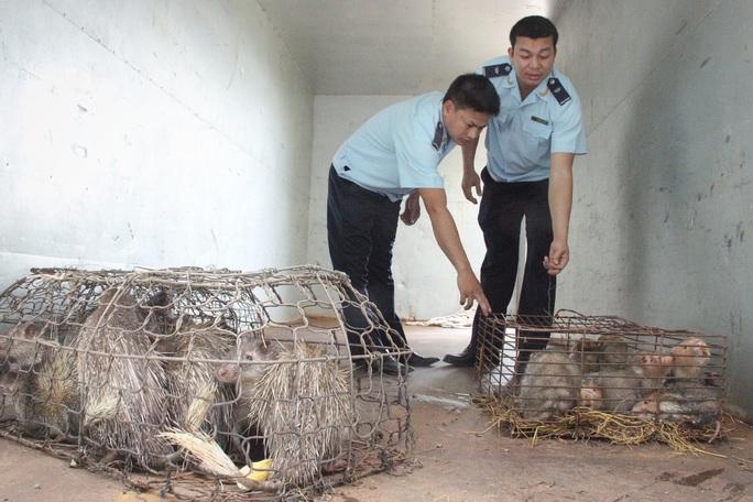 Cận cảnh thú rừng trước lúc thả lại rừng sau nửa tháng bị giam trong kho hải quan - Ảnh 1.