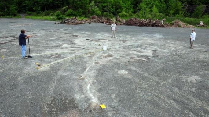 Hóa thạch rừng ma cổ quái nhất thế giới lộ diện ở New York - Ảnh 3.